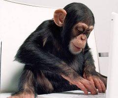 maimuță care știe SEO