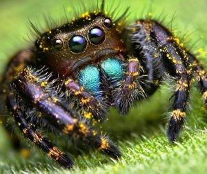 spider audit seo