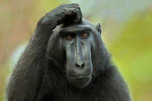 monkey thinking at SEO