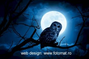 web design fotomat